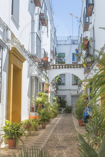small narrow spanish street with white houses and flowers at the walls photo