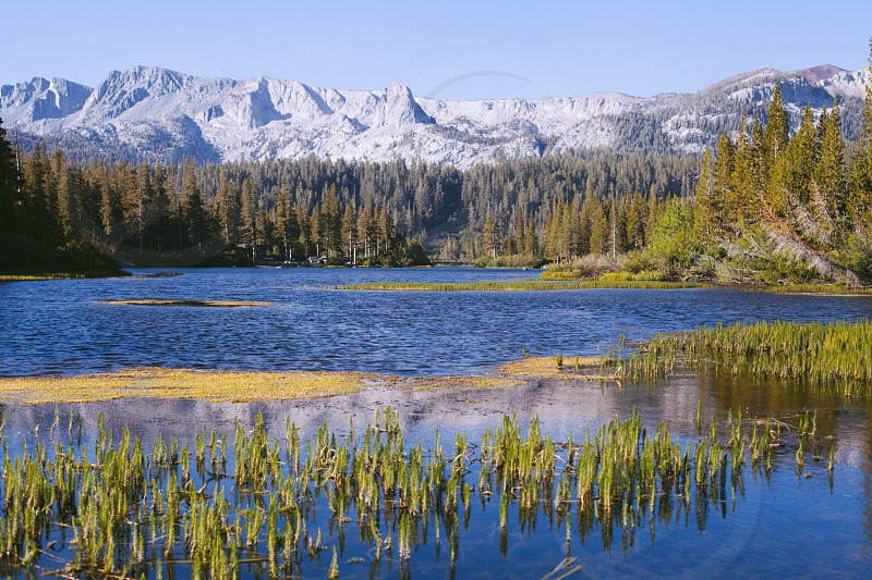 snow capped mountain range over pine trees in far bank of lake photo