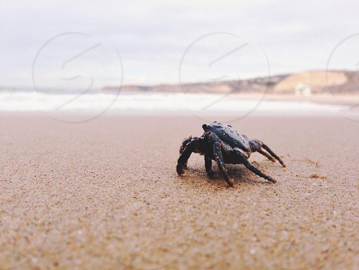 Laguna Beach California  photo