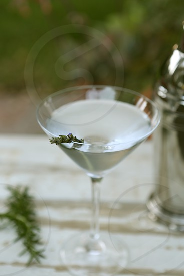 Gin and Botanicals in a garden photo