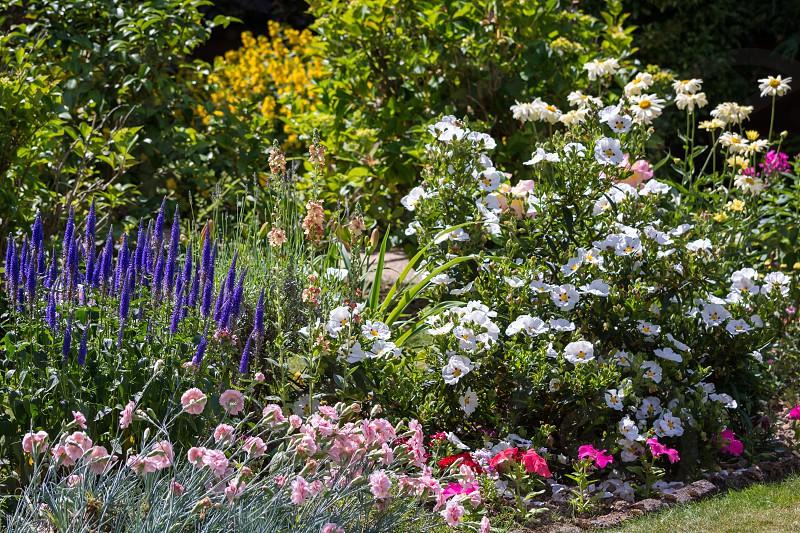 An East Grinstead Garden in Full Bloom photo