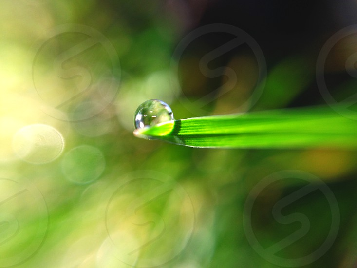 water dew on green linear leaf photo