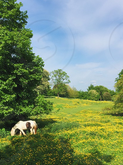 England horse spring flowers field country travel explore green photo