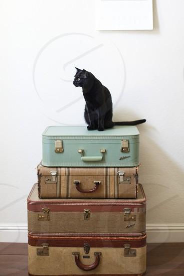 suitcases black cat travel photo