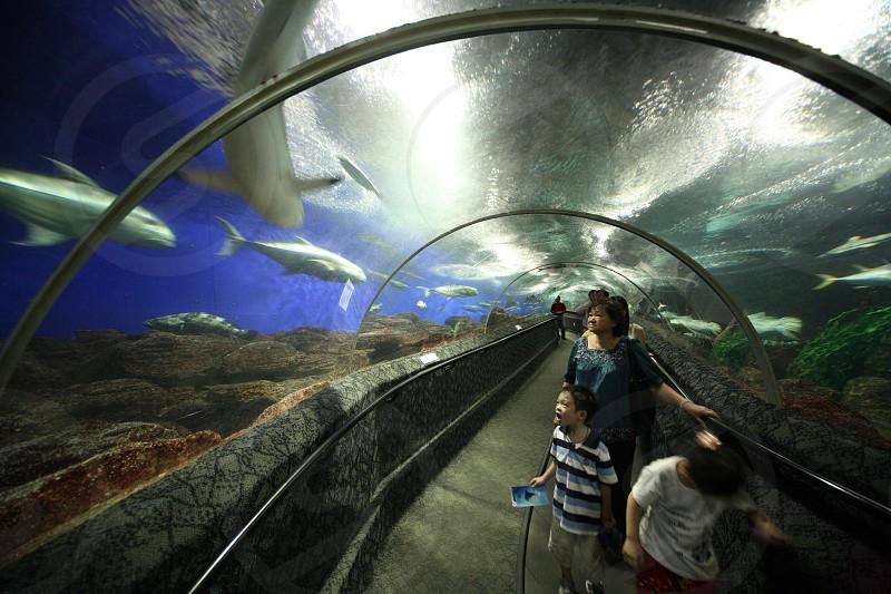 the Aquarium Underwater World on the Sentosa Island in the city of Singapore in Southeastasia. photo