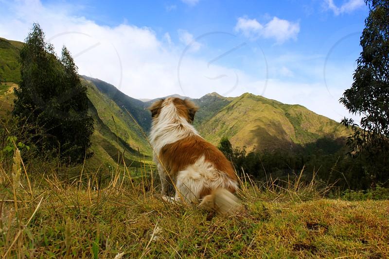 Dog wanderlust dream mountains explore photo