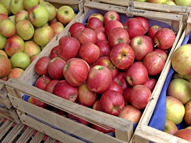 apples on a farmer market photo