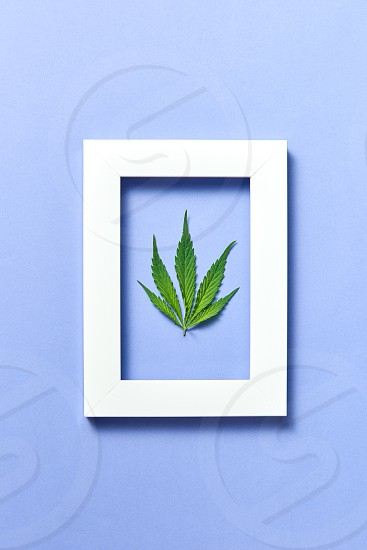 Decorative rectangular handmade frame with green fresh marijuana leaf on a pastel lavender background copy space. Flat lay. photo
