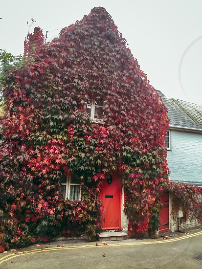 House in the Ivy leaves Autumn colours red leaves cottage rural retreat photo
