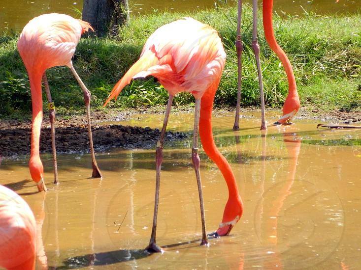 Flamingo Fun photo