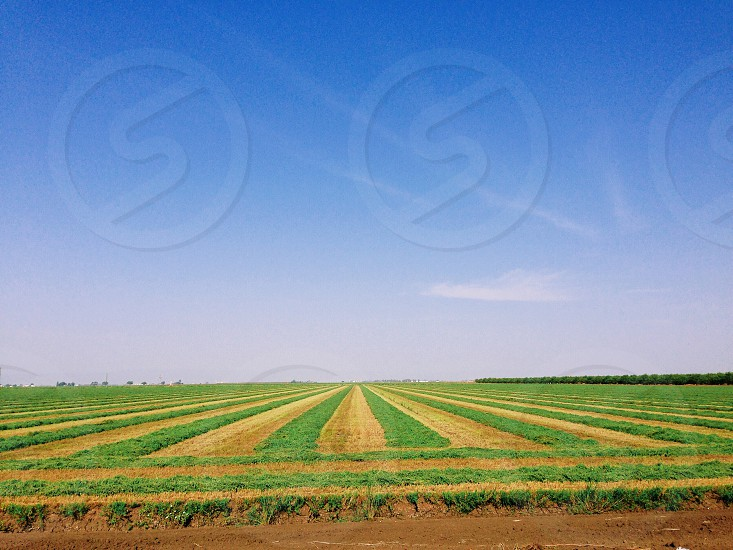 green rice field under clear blue sky photo