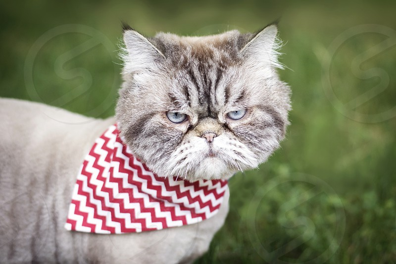 Portrait of an angry looking cat. photo