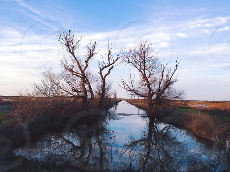 tree on water covered field photo