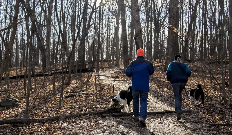 man and woman walking into the woods with two medium short-coated black-and-white dogs during daytime photo