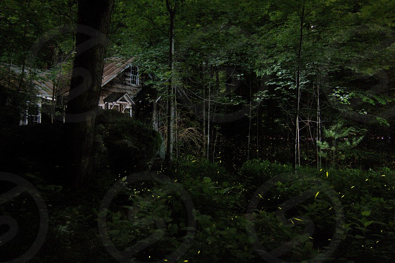 Fireflies at Elkmont in the Great Smoky Mountains National Park photo