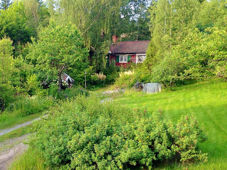 Red house surrounded by many shades of Green. Haninge just south of Stockholm Sweden. photo