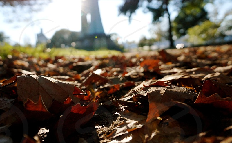 brown leaves photo