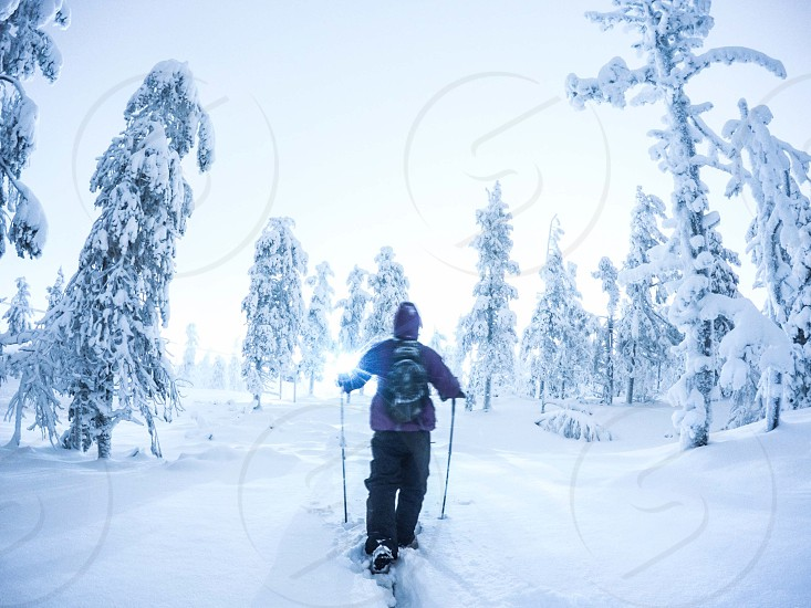Snowshoe winter forest cold night hiking photo
