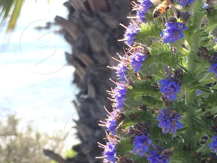 Laguna Beach California at noon photo