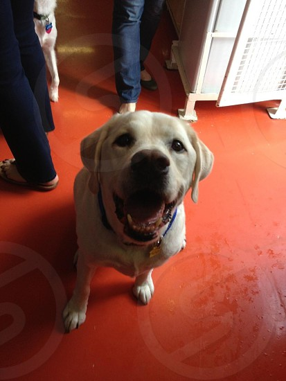 My dog Cabo on the Queen Mary II as happy as can be awaiting the next treat.  photo