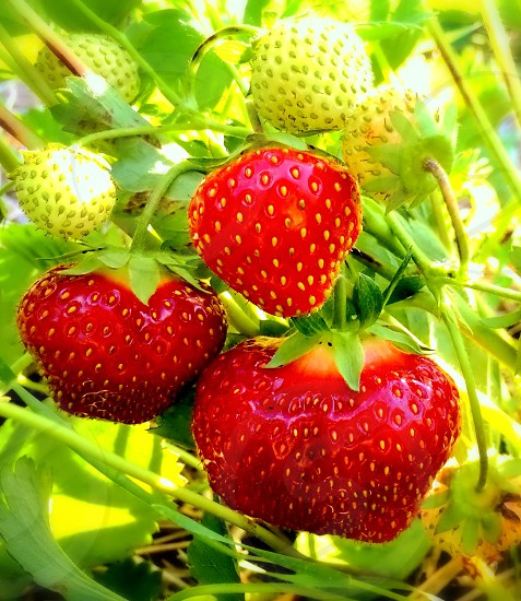 red and green strawberry fruit photo photo
