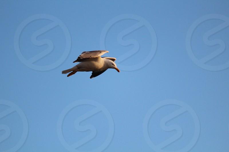 white albatross photo
