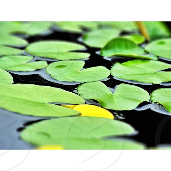shallow focus photography of green leaf on body of water photo