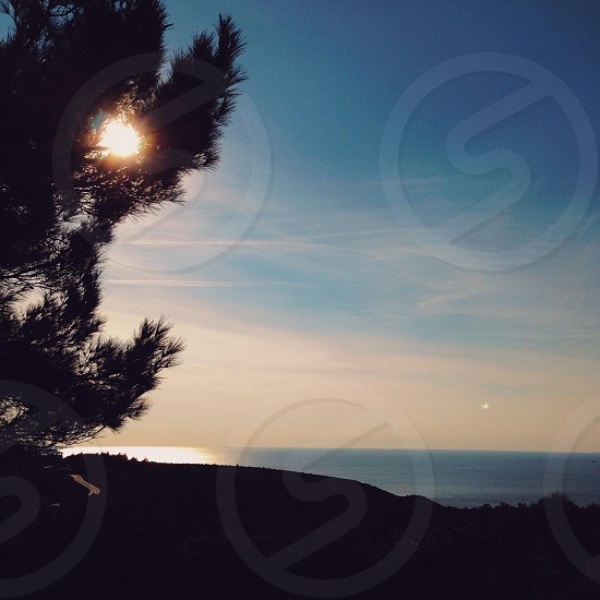 silhouette of tall tree on hill on sea side under clear sky photo