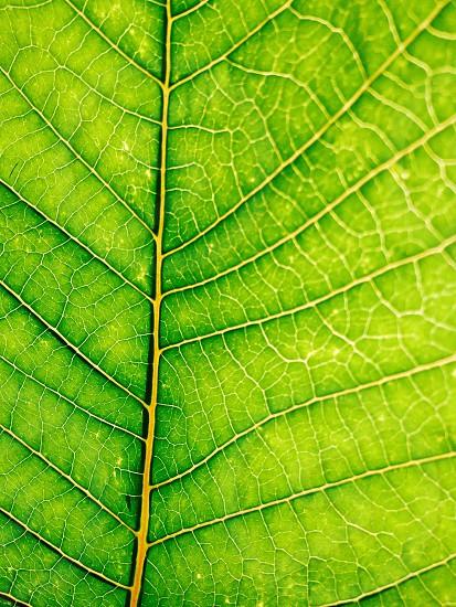 Nature ways photo