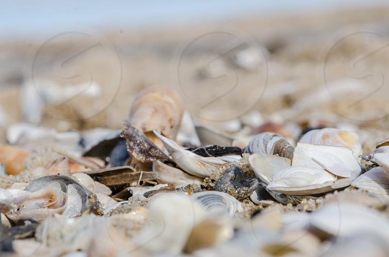 Shell covered beach photo