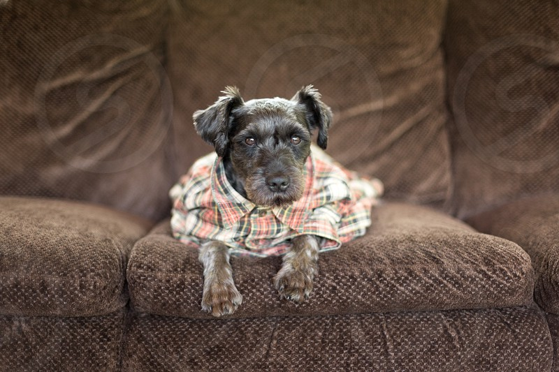 Dog wearing plaid shirt photo