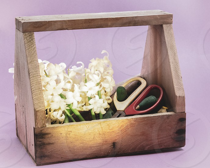 Hyacinth Flowers and Garden Tools photo