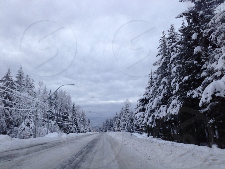 snow filled road along pine trees photo