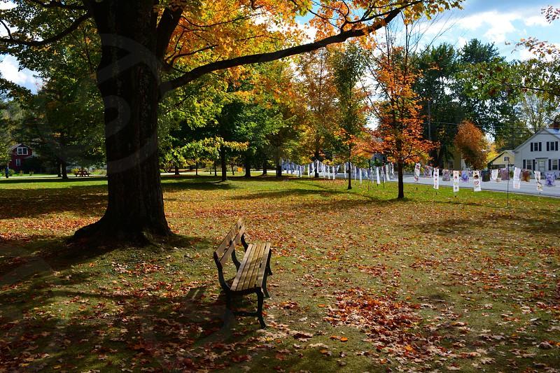 bench under a tree photo