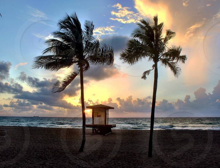 Post card Miami south Florida west palm ft Lauderdale life guard stand lifeguard stand trees Palm trees sunrise morning beach ocean sand vacation escape snow birds palms relax relaxing  photo