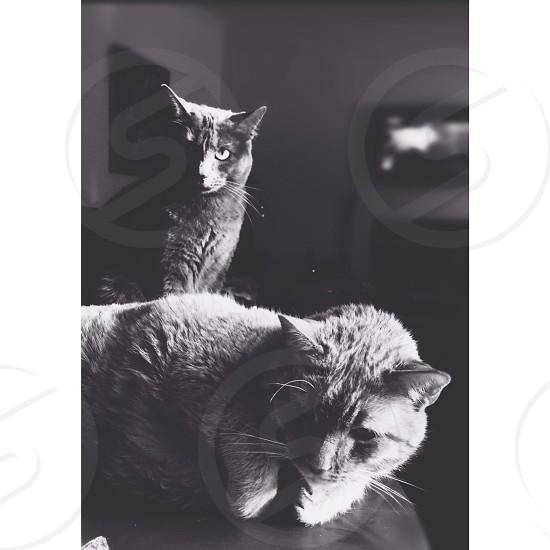 grayscale cat photograph  photo