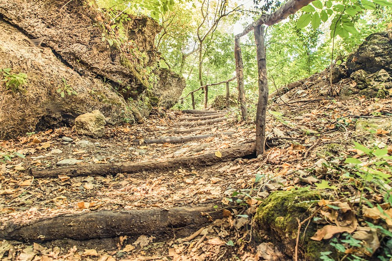 Forest Path With Wooden Steps In Autumn Forest photo