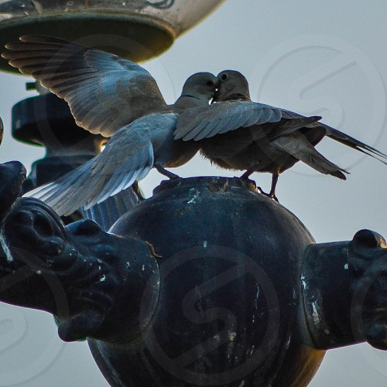 2 pigeons on top of black round pole photo