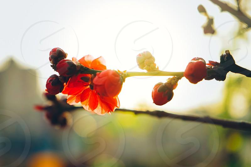 closed up photo of orange petaled flower photo