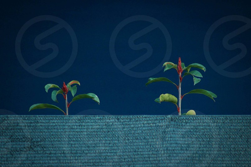 2 plant sprouts by the grey panel photo