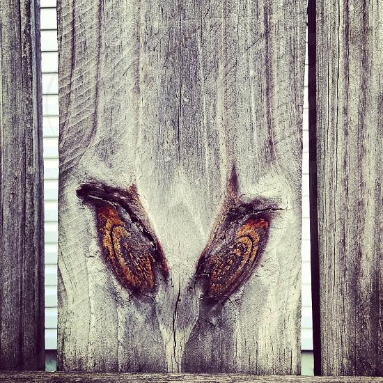 Evil wood fence eyes  photo