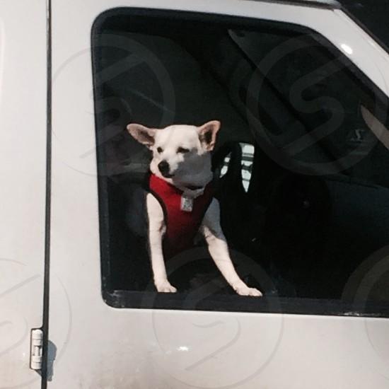 Dog car ride window yyc Calgary  photo