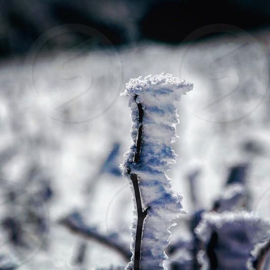 Snow artisticwinds  photo
