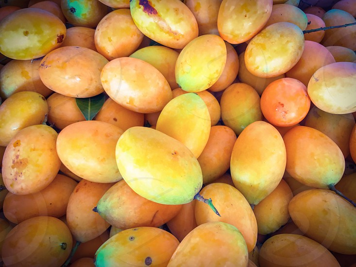ripe marian plum plango mango sweet yellow leaf leaves fruit berry sweet sour maprang mayong bouea macrophylla tropical Buah Remia Setar Kundang gandaria plant oval round delicious southeast Asia Thailand juice juicy fresh mayongchid orchard market food bunch nature background photo