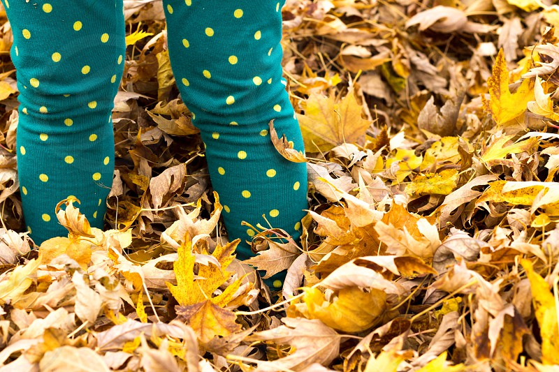 person standing on yellow leafs photo