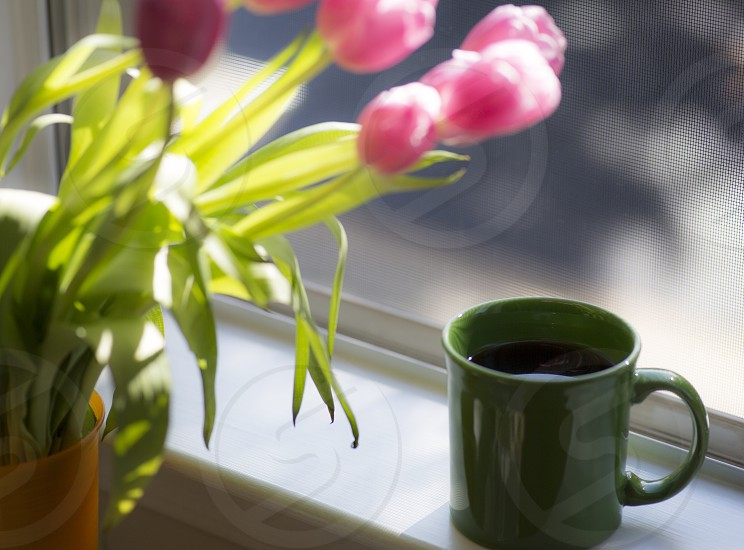 green ceramic mug near window and pink tulips photo