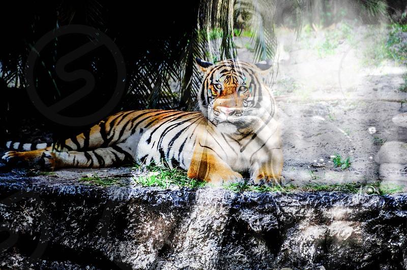 filmmaker abstract tiger photographer self-portrait  photo