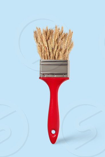 Creative paint brush with mature wheat on a pastel blue background place for text. Non toxic concept painting. photo