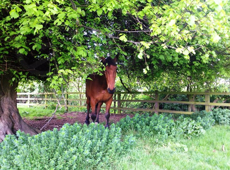 Horse - tree - leaves - countryside - Peterborough - England - Fence - grass photo