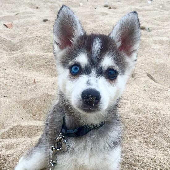 Dog puppy beach beach bum dogs photo